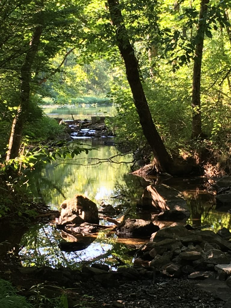 Tohickon Creek - Photo by Lisa Weikel